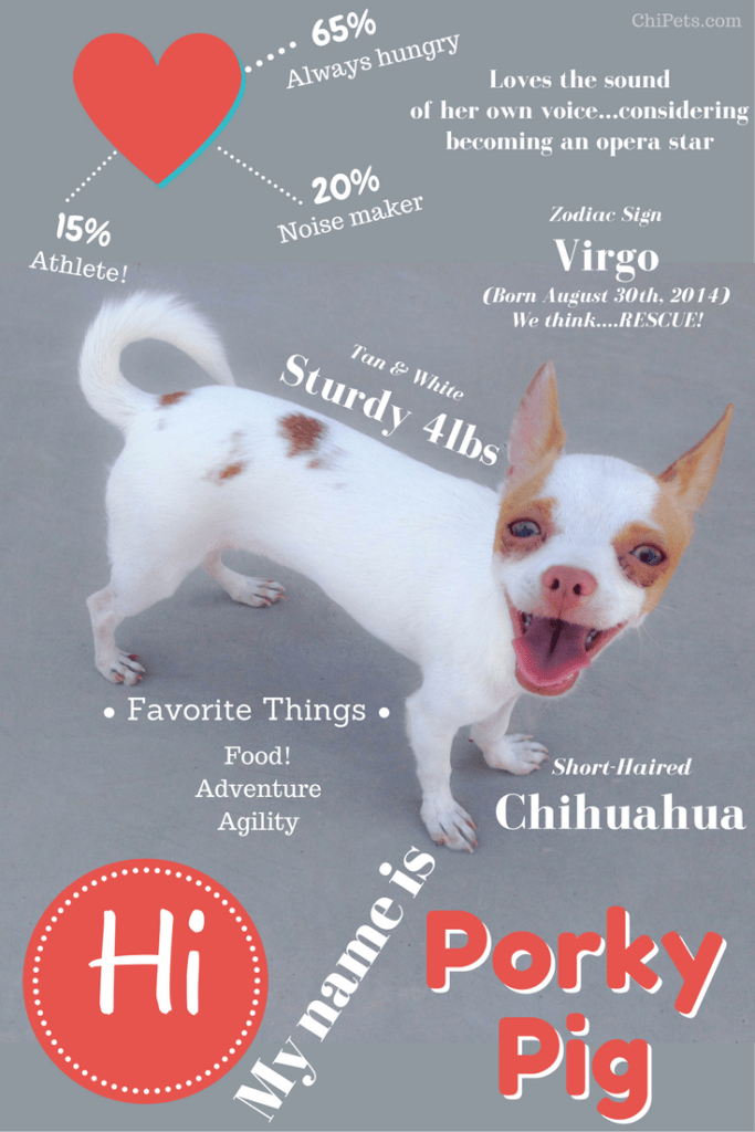 About Us  Chi Pets