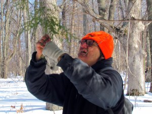 Gary Kramer examines the short, flat needles characteristic of Eastern Hemlock