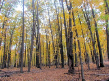 Hickory Hill Interior color