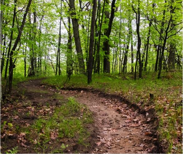 Bundy Hill Trail
