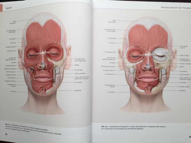 The Face Pictorial Atlas of Clinical Anatomy