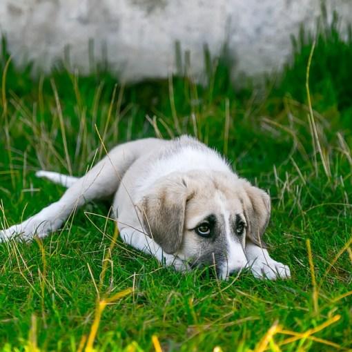 Hunde reagieren meistens ängslich auf laute geräusche