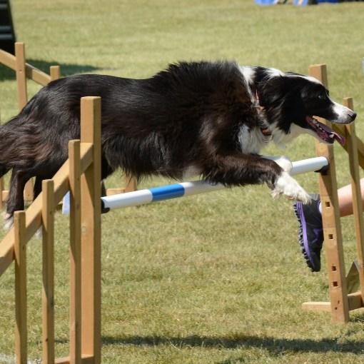 Hundesport: Die beliebtesten und häufigsten Sportarten für Hund und Halter