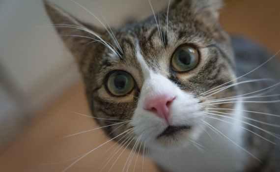 Tipps wie Sie Ihrer Katze die Angst vor Sylvester nehmen können