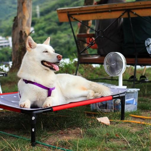 Vorbereitungen für den Urlaub mit Hund