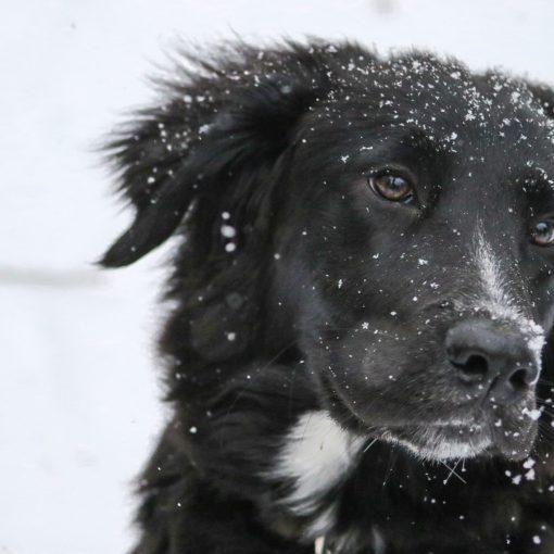 Wichtige Schritte um einem misshandelten Hund das Vertrauen zurückgeben