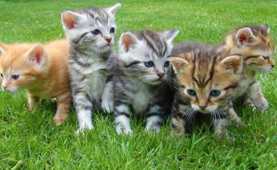 Katzen sind wirklich großartige Begleiter und Freunde.