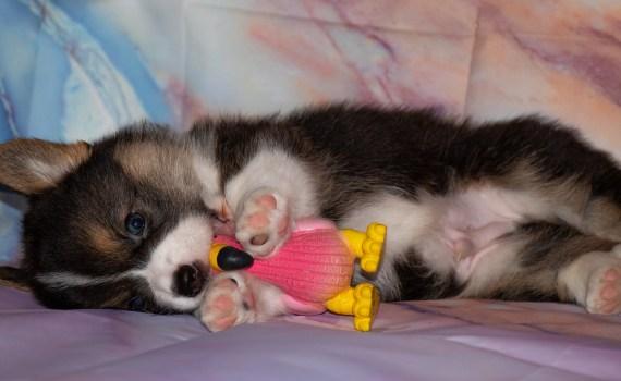 Langeweile kann bei Hunden die verschiedensten Verhaltensmuster hervorrufen.