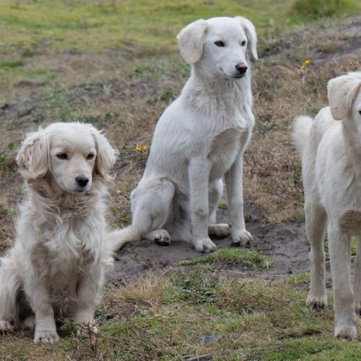 Therapiehunde. Blindenhund Spürhunde helfen Menschen sich im Alltag besser zurechtzufinden