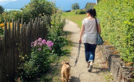 ein Hund zwingt Sie täglich mehrmals raus zum Gassigehen, bei Wind und Wetter – ob Sie wollen oder nicht