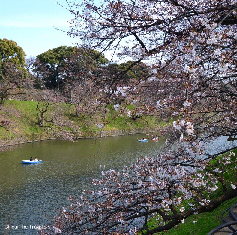 Chidorigafuchi Ryokudo sakura Tokio 4
