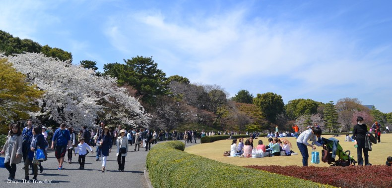 Imperial Palace Gardens sakura Tokio 4