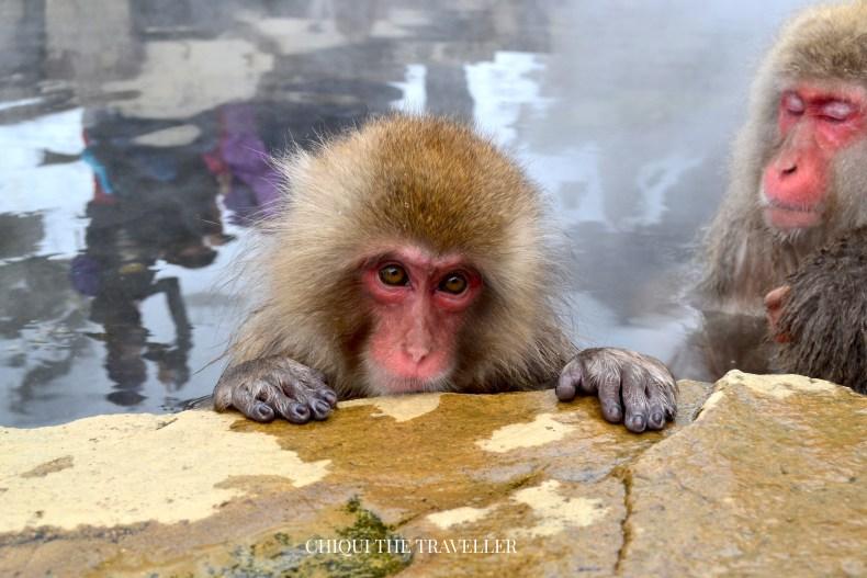 Cuando estaba tomando fotos cerca del borde del onsen se me acercó este monito a mirarme.
