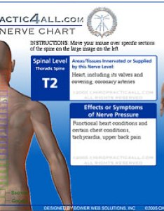 Flash interactive spinal chart also chiropractic all rh