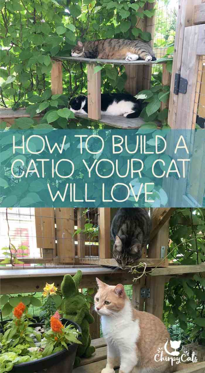 The perfect catio your cat will love