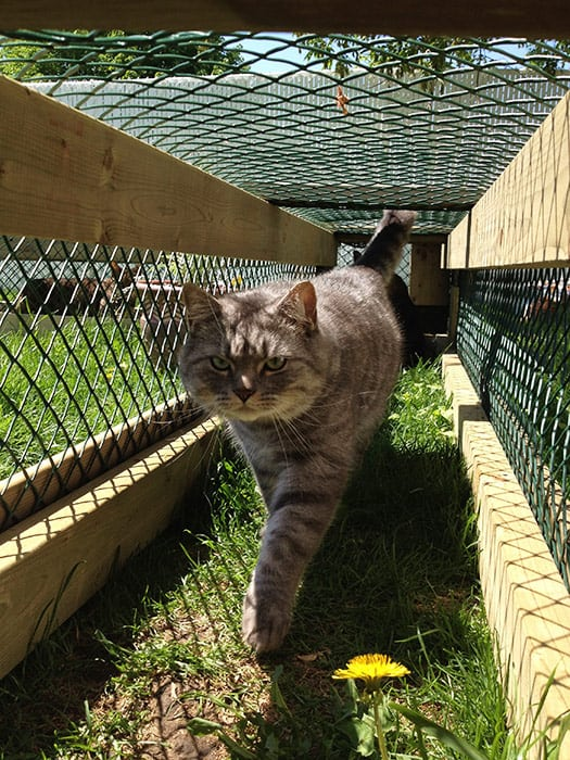 Guest Post Building Your Cat S Dream Catio Lincoln
