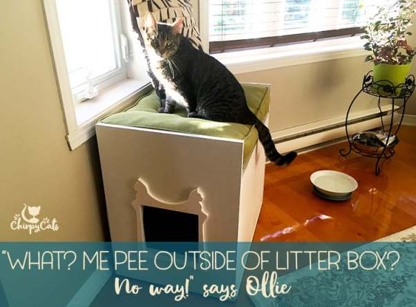 Why does my cat refuse to use the litter box?