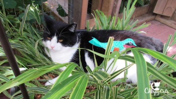 Cat sleeps in pot plant