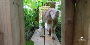 Cat walks through tunnel, Monday haiku