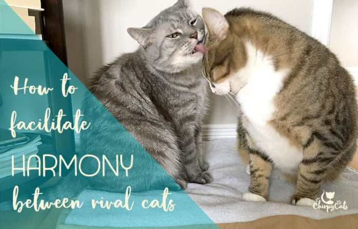 How to facilitate harmony between rival cats