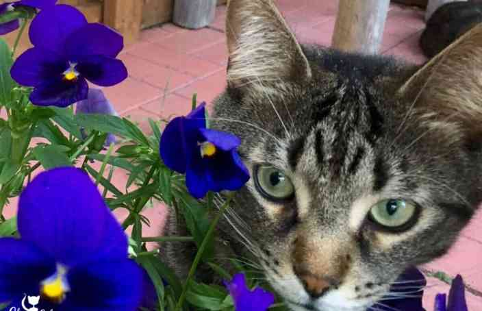 Hi, my name is Ollie and I love pansies!