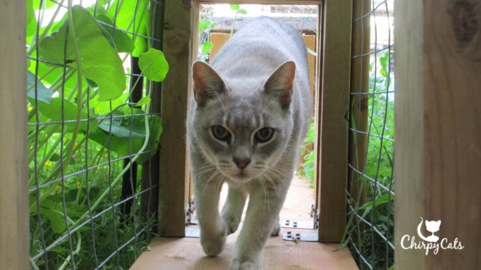 Cat running through tunnel