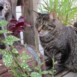 Cat watching water fountain