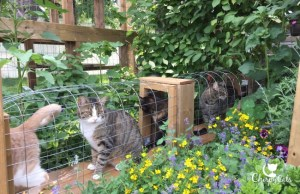 Cats in catio tunnel