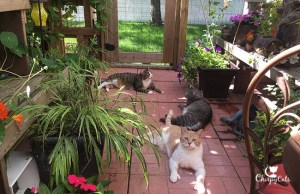 group of cats relaxing together