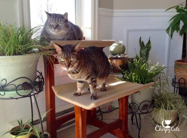 Cats lounging on their cat seat