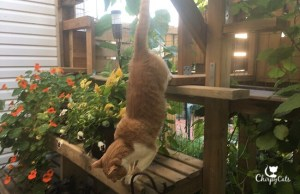 ginger cat jumps down
