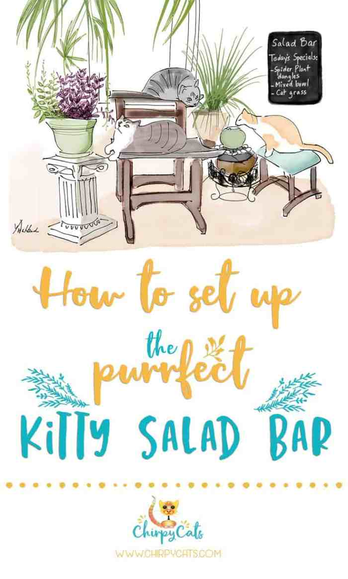 How to Prepare the Perfect Kitty Salad Bar