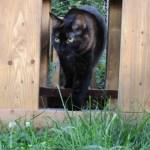 Tortoiseshell cat in tunnel