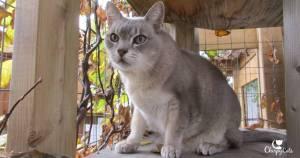 senior cat in catio