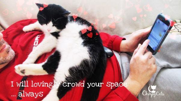 Human cat bed