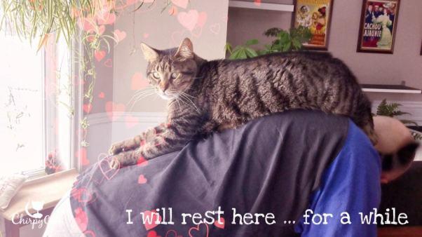 Human kitty perch