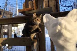 Ollie the cat says hello to snow sculpture of cat