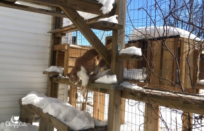 Jimmy the cat in the snow