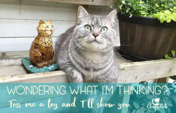 what is your cat thinking?