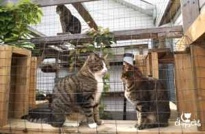 Two cats sitting in a catio