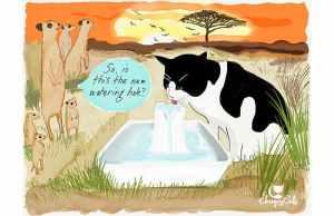 cat drinking water funny cartoon