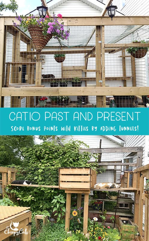 Charmant Catio With Tunnels