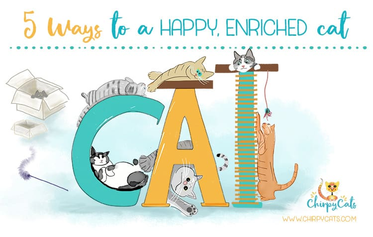 5 Essential Must-Haves for a Happy Chirpy Cat