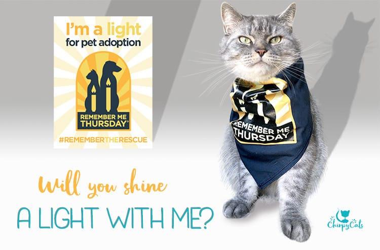 Cat Protection Livingston