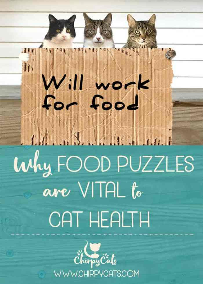 Why food puzzles are important for cat health