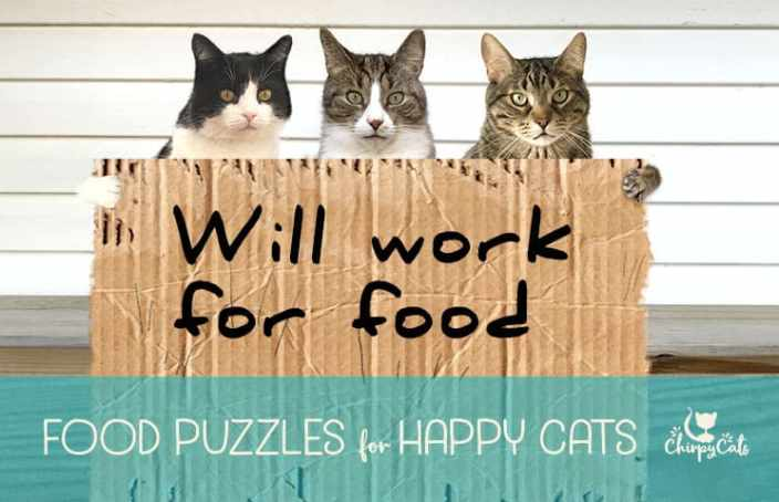 Food puzzles are important for your cat's health.