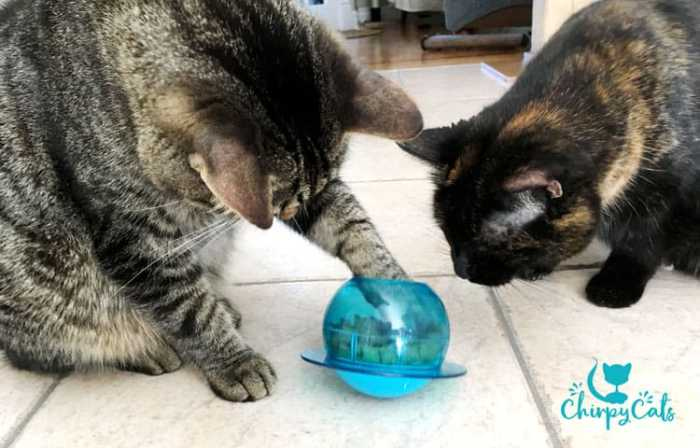 Fish Bowl cat toy by Petsafe