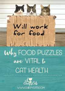 Why food puzzles are important for your cat's health