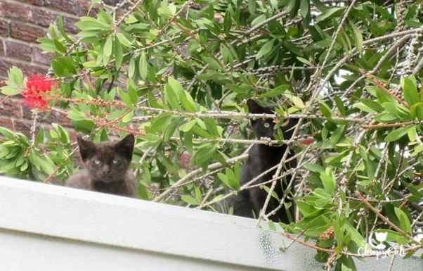 black kittens on roof