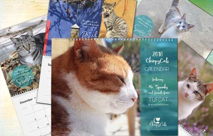 cat calendar featuring the TUFCAT feral cats